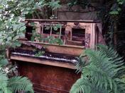 Woodland Garden Blakenham