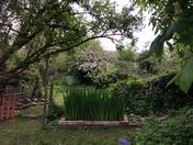 Our wild garden
