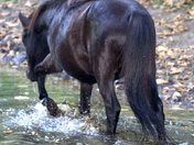 Pony strolls along  a watery path C