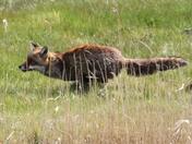 Wildlife of Hen Reed Beds