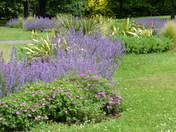 Landscape - Valentine park Ilford