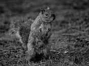 The Squirrel in Clarence Park