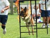 Hot Dogs at Stonham Dog Extravaganza.
