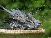 Monday wash