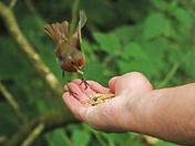 A bird in hand...
