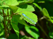 DAMSELFLY  IN HATFIELD FOREST ESSEX