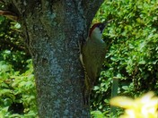 Mr Woodpecker