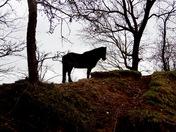 Pony on watch