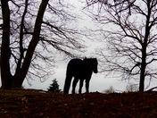 Pony on roydon common