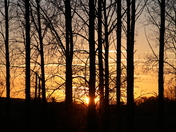 Silhouette: Trees
