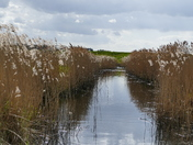 Reed Beds Full Of Life
