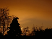 SILHOUETTE. Trees And Sunset