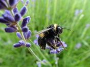 Very Wet Bee