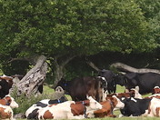 The girls shading under the old oak tree at Fen Farm.