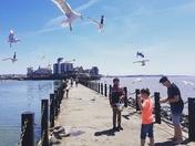 Sun, sea and seagulls