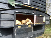 Shepherds hut and Ferrets on wheels!