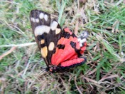 Butterfly or Moth ?