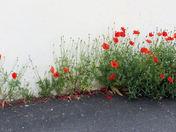Photo Challenge - Theme: Summer Flowers