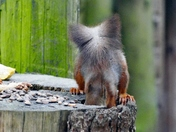 Oops, Now Where Did That Nut Go?