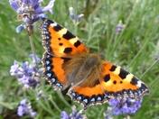 SUMMERTIME. Butterflies In The Garden