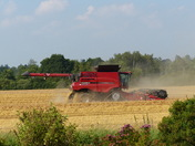 SUMMERTIME. Cutting Corn