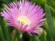 Alternative Summer Flowers - Photo Challenge