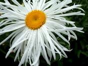 Grace's Flowers