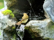 The Chiffchaff & Water Feature