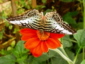 Exotic butterflies at Jimmy's farm.