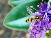 Bees Feeding
