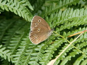Butterflies & Moths of Holt Lowes