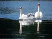 Felbrigg Pond