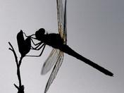 Dragonfly on twig