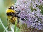 A Nectar Collecter