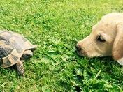 Izzy and Flo