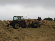 True old fashion farming, going back to the good old days.
