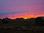 Sunset in a barley field