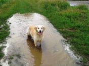 A lovely, new puddle has appeared overnight!