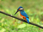 The Kingfisher part 1 of 2 parts