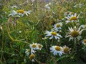 Favourite Bloom - Weston Flower Show