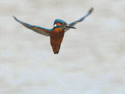 The Kingfisher part 2 of 2 parts