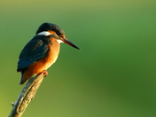 Kingfishers and Hares!