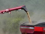 Harvest Time, Dust Everywhere