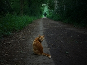 Cat on the Path