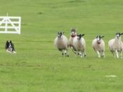 English National Sheepdog Trials.