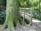The bridge by the tree