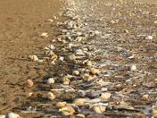 Sea Shells at the Seaside