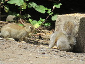 Confrontation -Baby Bunnie & Squirrel