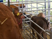 Making friends at the Wayland Agricultural Show