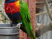 Colourful Macaw.